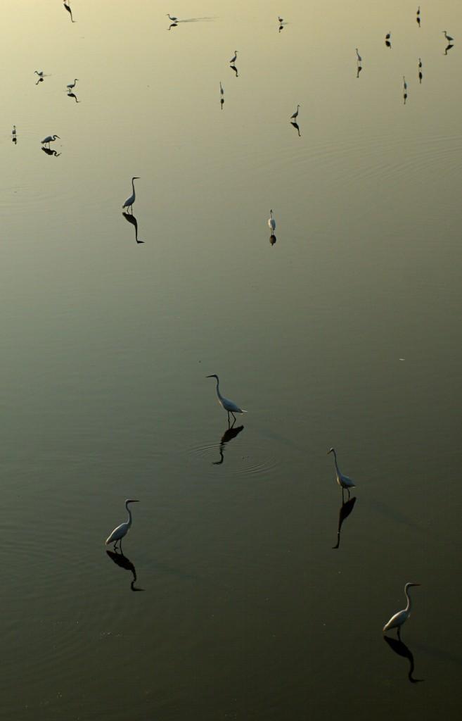 wre_north_lake_birds_0368_20140505_1600